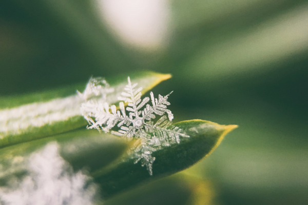 Snowflakes falling on budding plants (aka spring time in Minnesota)| Sparkhouse Blog
