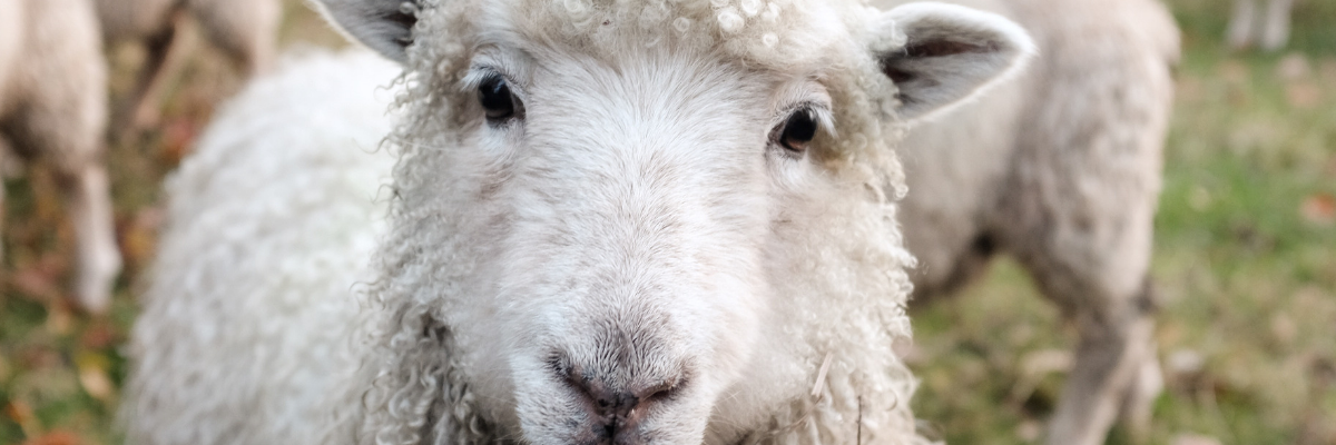 SHC_blog_livestock